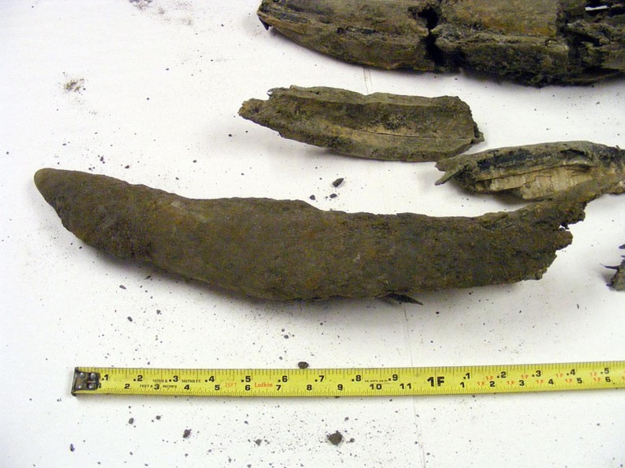 A Washington State Department of Transportation inspector discovered fragments of a tusk believed to belong to a Columbian mammoth while working on the Interstate 5 interchange in Ridgefield.
