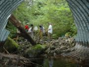 Culverts are among the most common type of barrier for fish on Washington waterways.