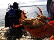 Dungeness crab (File photo)