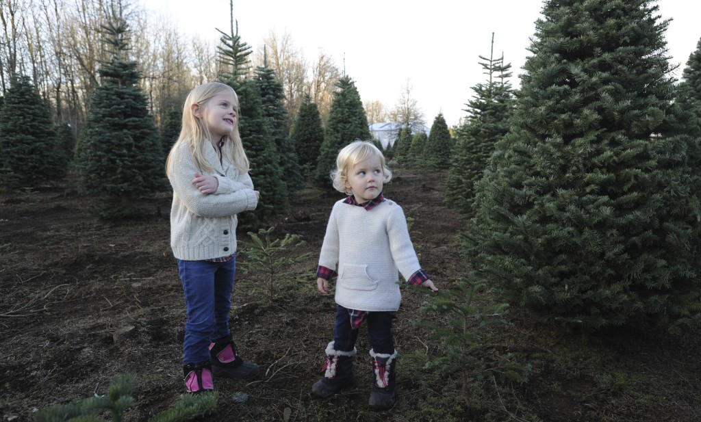 Clark County tree farms, such as Thorntons', provide not only crucial firs,  but memories for families - Growing A Christmas Tradition The Columbian