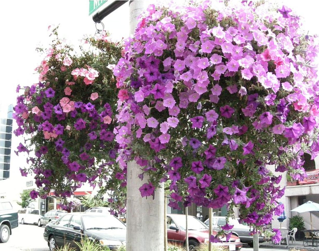 Flower pots are among the things that help make downtown Vancouver an inviting place, said consultant Michele Reeves.
