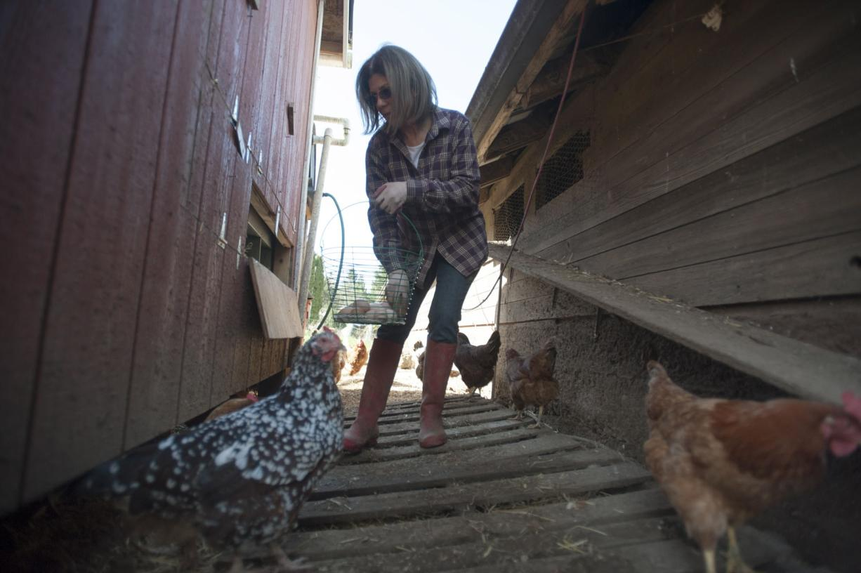 Jonell Kelsey collects eggs at the Kelsey farm in Brush Prairie. The Kelsey farm produces eggs for New Seasons, and also sells direct to customers.