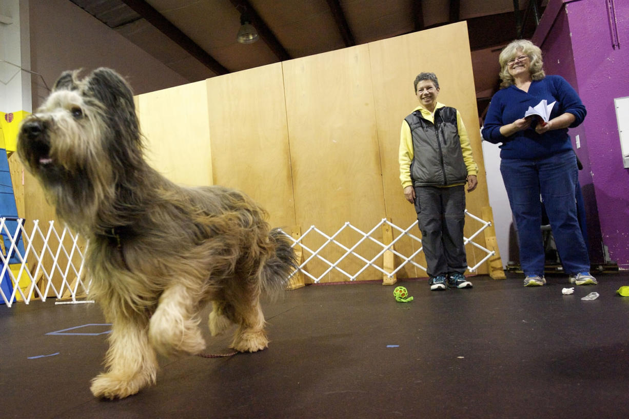 Photos by Steven Lane/The Columbian Joan Armstrong, center, trains dogs at Dog Days Dog Training.