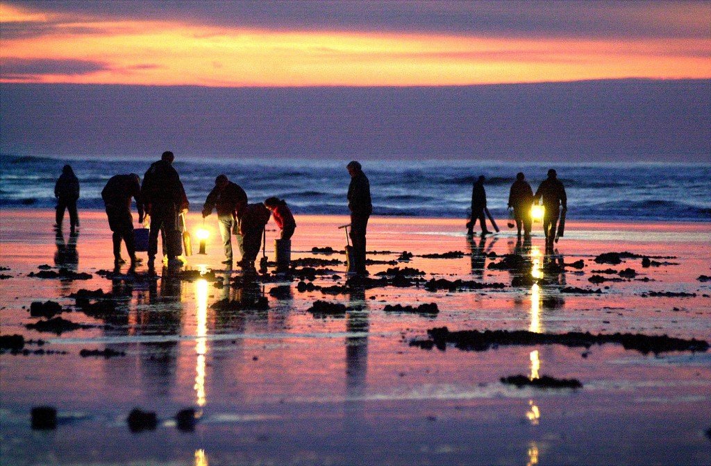 People dig for razor clams in Long Beach.