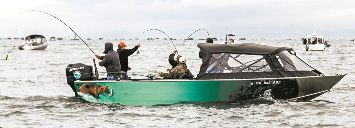 A goal of the joint state salmon plan is to allocate enough fall chinook salmon to the Buoy 10 fishery in the Columbia River estuary to allow retention from Aug.