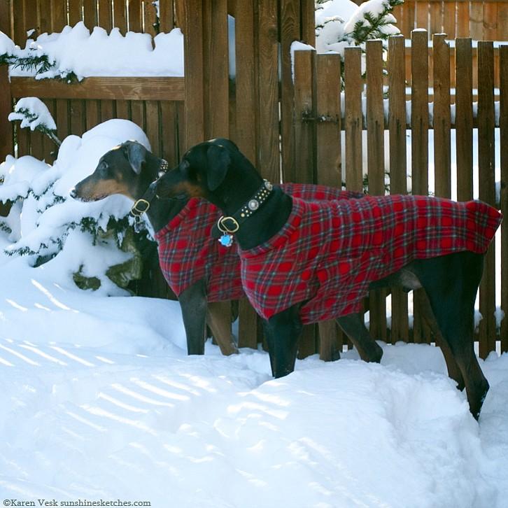 Sweaters For Doberman Pinschers Wwwpicswecom