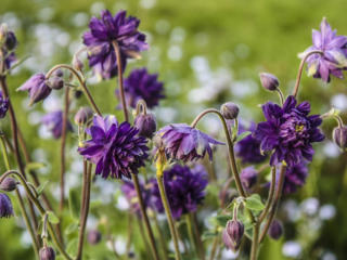 June reader photos: Change of seasons