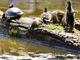 June Reader Photo Challenge: Wildlife
