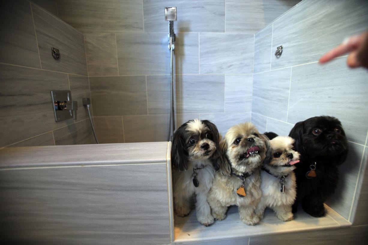 From left, Boo, Olivia, Buzz and Buddy, all dogs belonging to a Standard Pacific employee, check out the pet spa suite option in the new homes in their Avignon development at the new Blackstone community Aug. 4, 2014 in Brea, Calif. Amenities in the pet suite include a step-in wash station with a hand-held shower spray, a commercial-sized pet dryer, bunk beds, cabinets for toys and treats, a flat screen TV, and a washer-dryer, just for the pets.