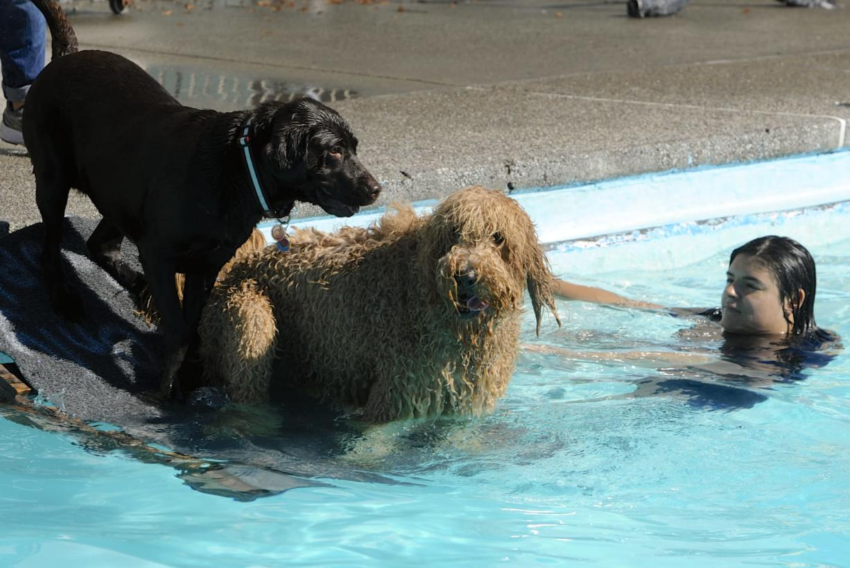 "Alicia Pacheco, right, watches as ""Xavi"" gets a little push from a black lab as dozens of dogs chase balls in the pool at Lake Shore Athletic Club on Saturday. The event, the annual Doggie Dive, is a fundraiser for the Humane Society for Southwest Washington."