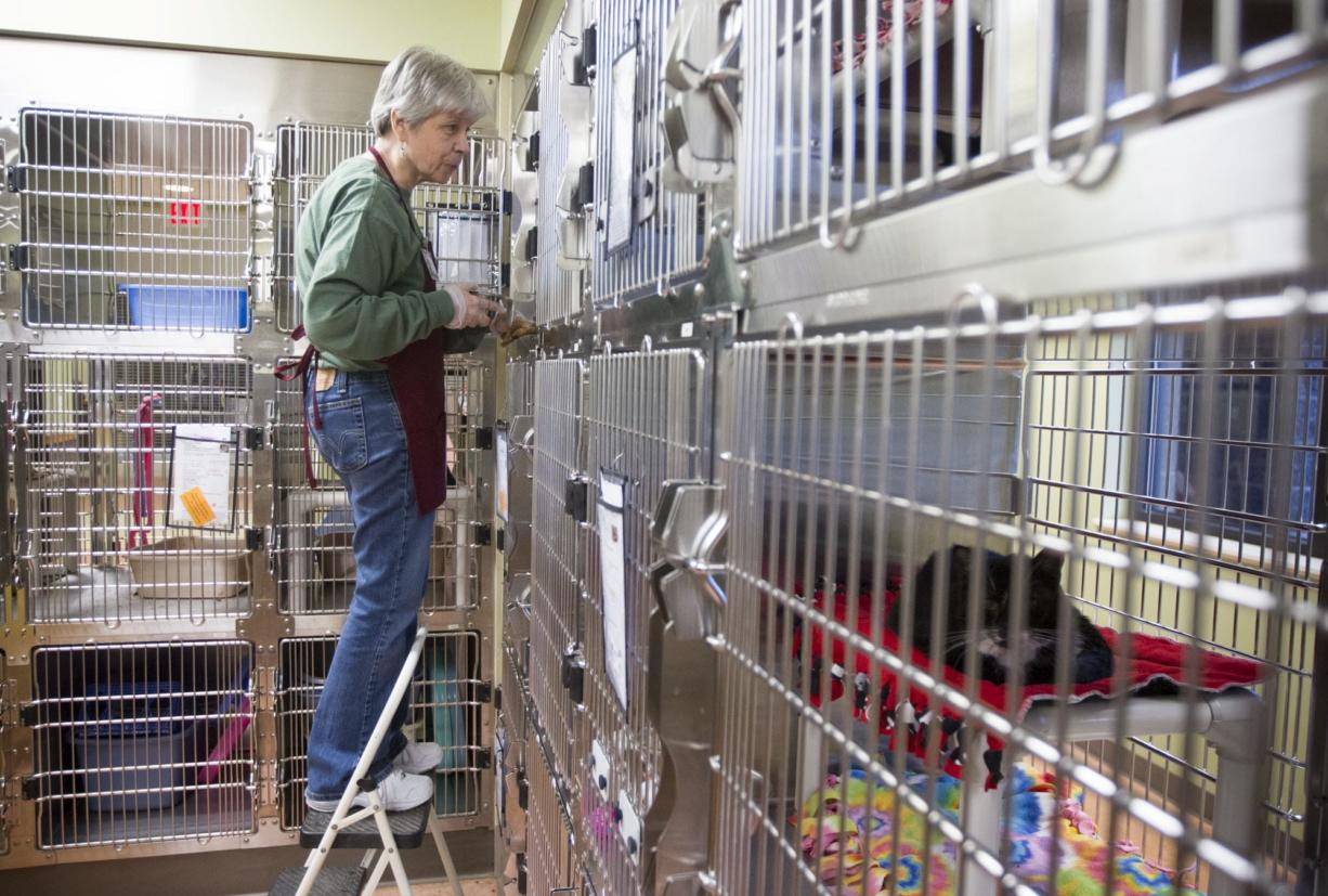 Catherine Costa helps clean cat cages at the Humane Society for Southwest Washington on Christmas Day.