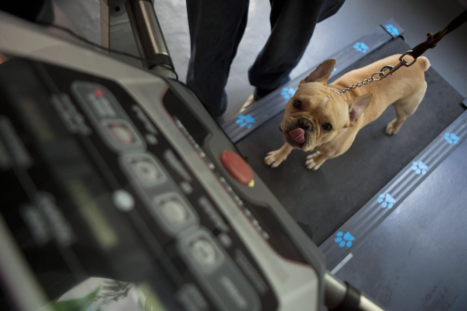 Mexican middle class goes to dogs - Columbian com