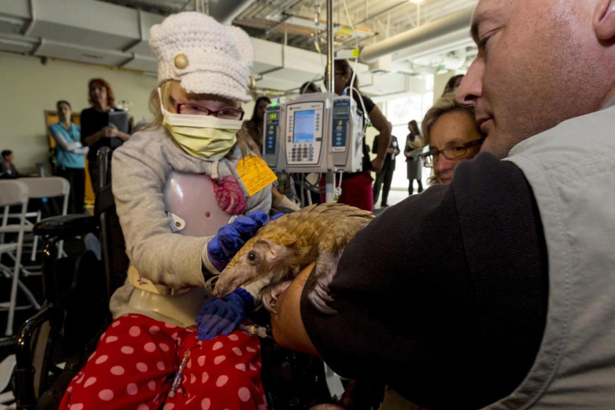 San Diego ZooKids ambassador Rick Schwartz shows Baba, a pangolin from the zoo, to children at Rady Children's Hospital in San Diego.