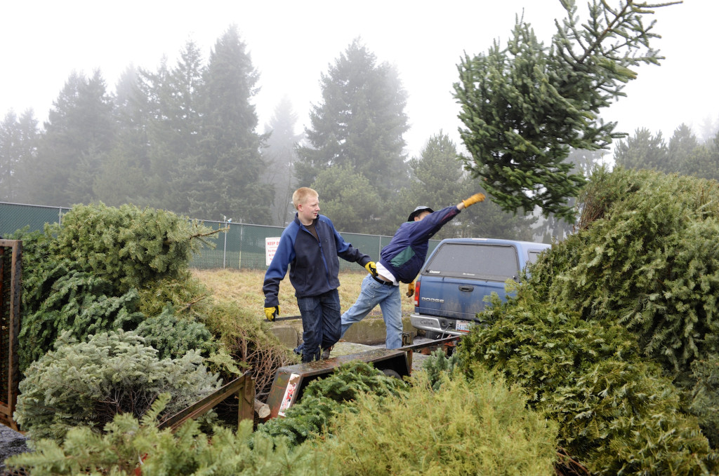 jerard moore left and robert withee unload christmas trees at mcfarlanes bark during boy - Boy Scout Christmas Trees