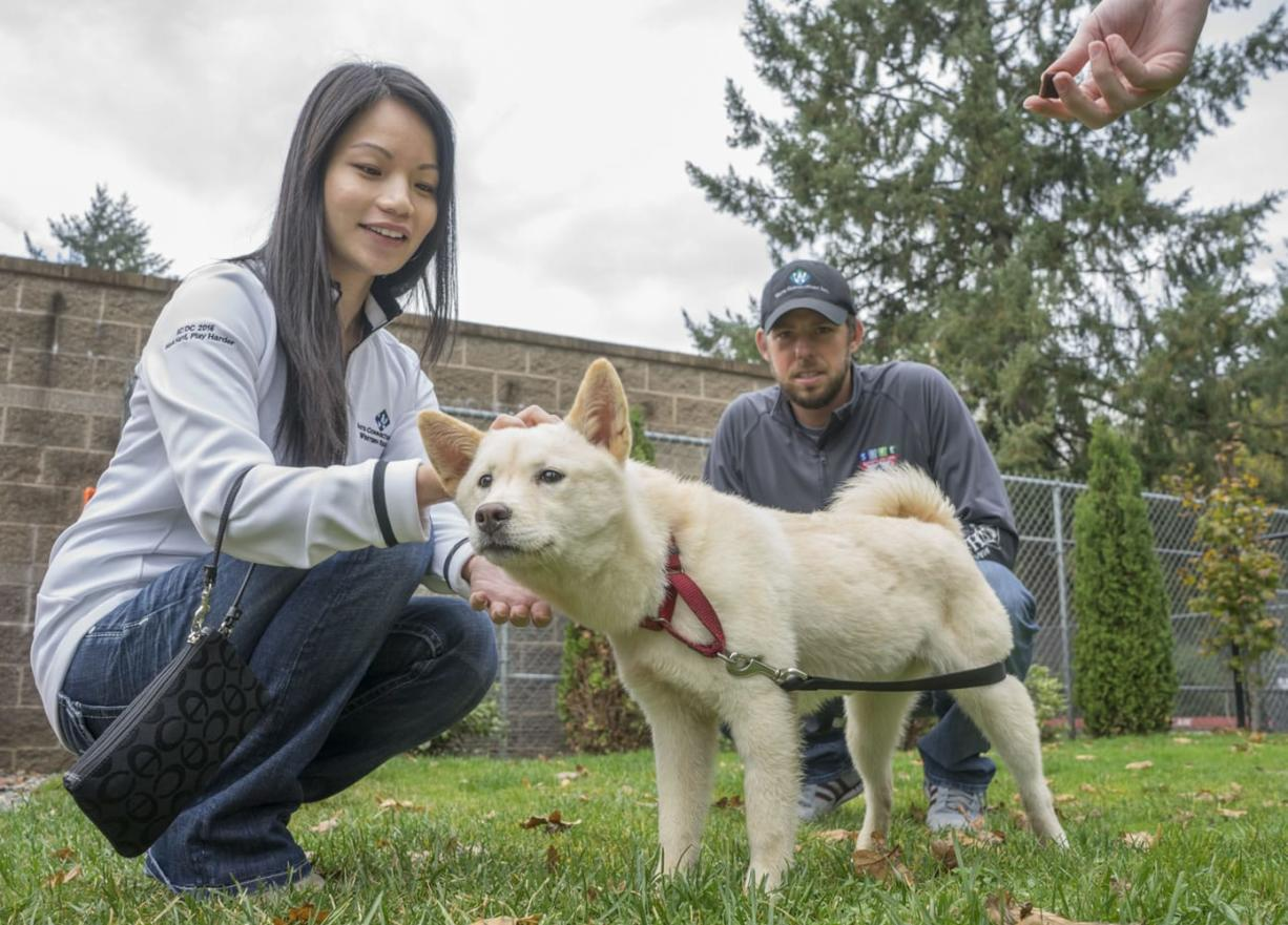 Autumn and Jeff, a couple from Vancouver, walk a 5-month-old Jindo mix, who they are renaming Seoul, before taking her home on Saturday. The puppy was rescued from a South Korean dog meat farm this summer.