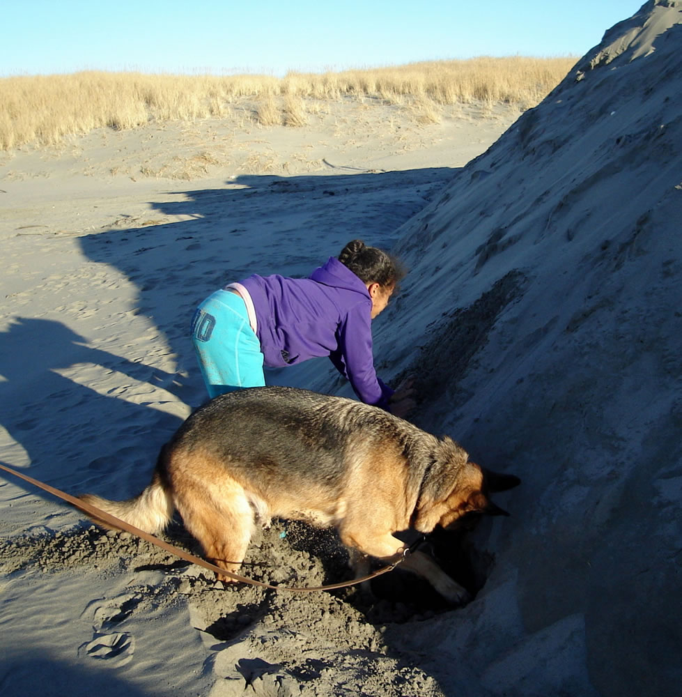 I took this photo at Ocean Park, Washington earlier this year of my granddaughter and my dog digging together in the sand.  Whenever she digs, the dog must also dig.