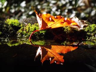 October reader photos: Fall foliage