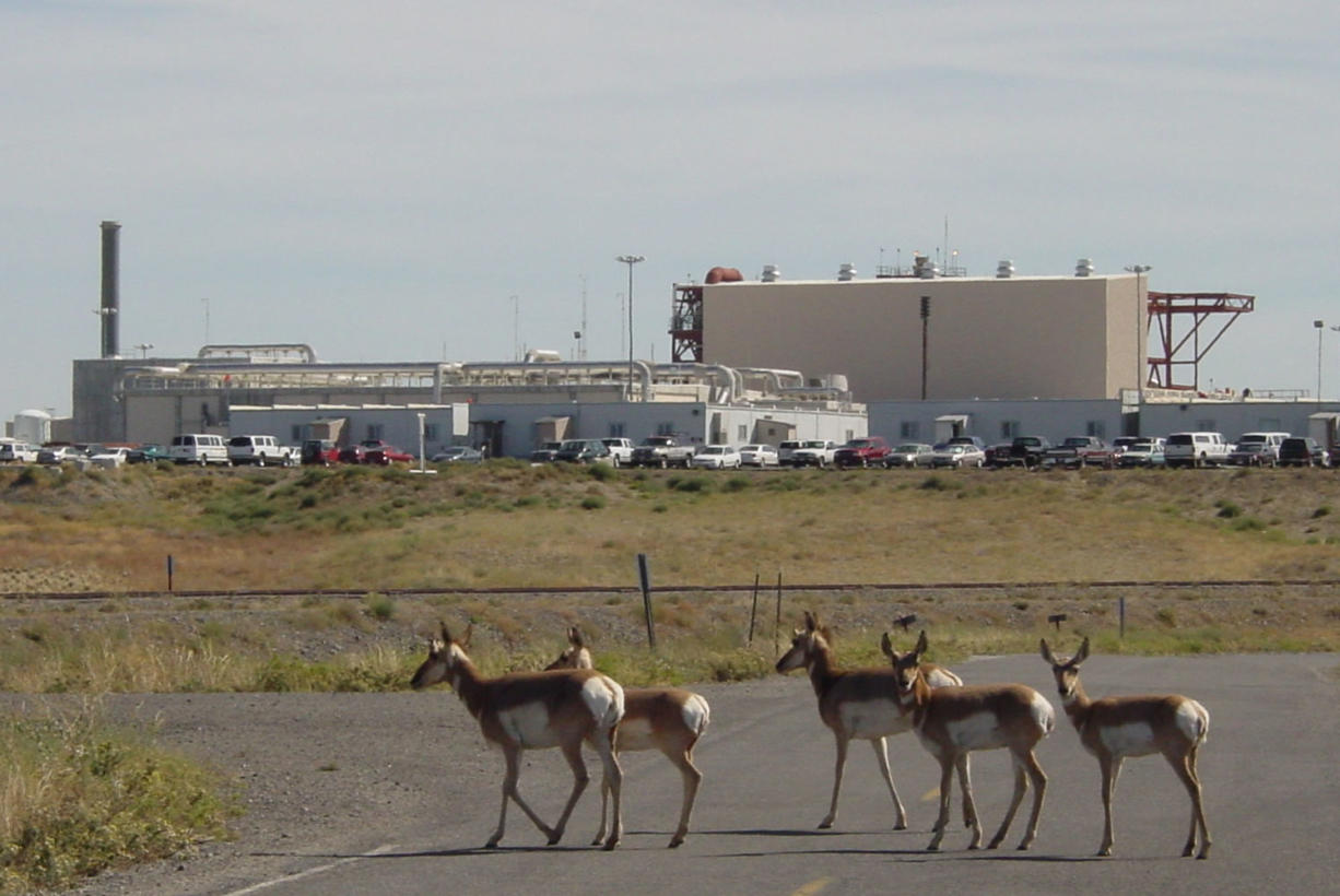 Oregon Department of Fish and Wildlife Since 1969, pronghorn had lived behind fences at the Umatilla Chemical Depot near Hermiston, Ore. Thirty-eight of the antelope-like animals, which also resemble deer, were taken away by helicopter Wednesday and driven 300 miles south for release.