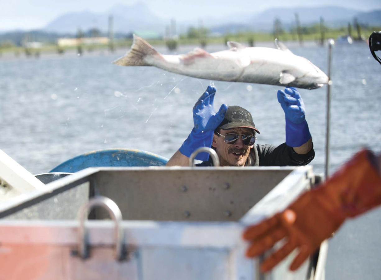 Gillnetters in the lower Columbia River say their fisheries fill niches in the market when high-quality salmon are not available from other waters.