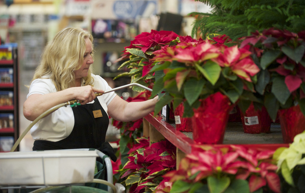Employee Patty Harms waters poinsettia plants in 2015 at the Grand Central Fred Meyer.