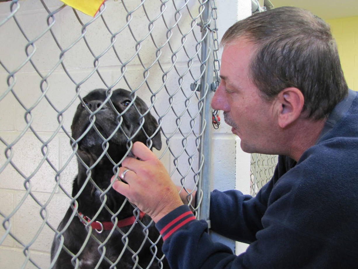 Arlt soothes an anxious dog at the shelter.