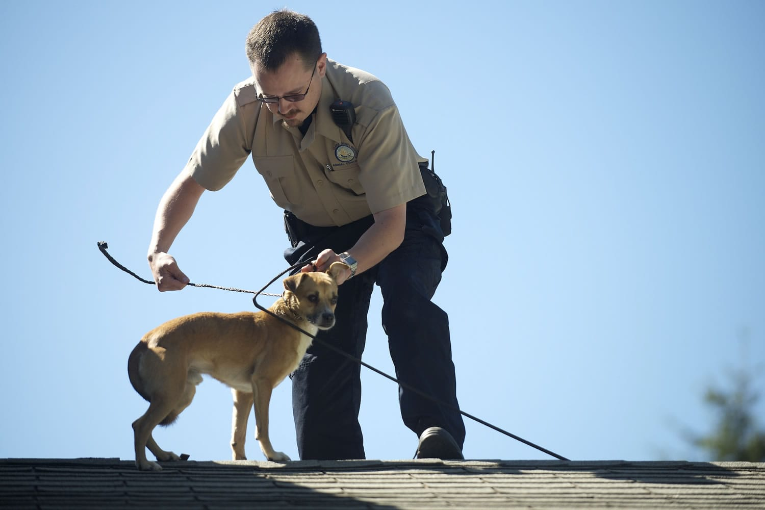 A Chihuahua mix named Brownie was stranded on the roof of an Orchards area house Monday morning. Clark County Animal Control Officer Patrick Higbie rescued the dog off the roof.