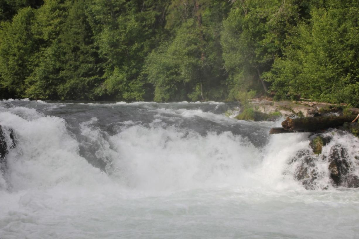 Fall chinook salmon are not expected to go upstream beyond Husum Falls at river mile 7.6.