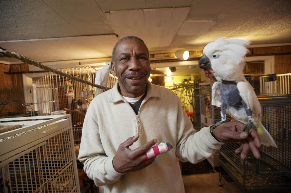 """Chris Driggins with Einstein, an umbrella cockatoo who tore a fingernail off his right hand and sent """"Birdman"""" to the emergency department."""