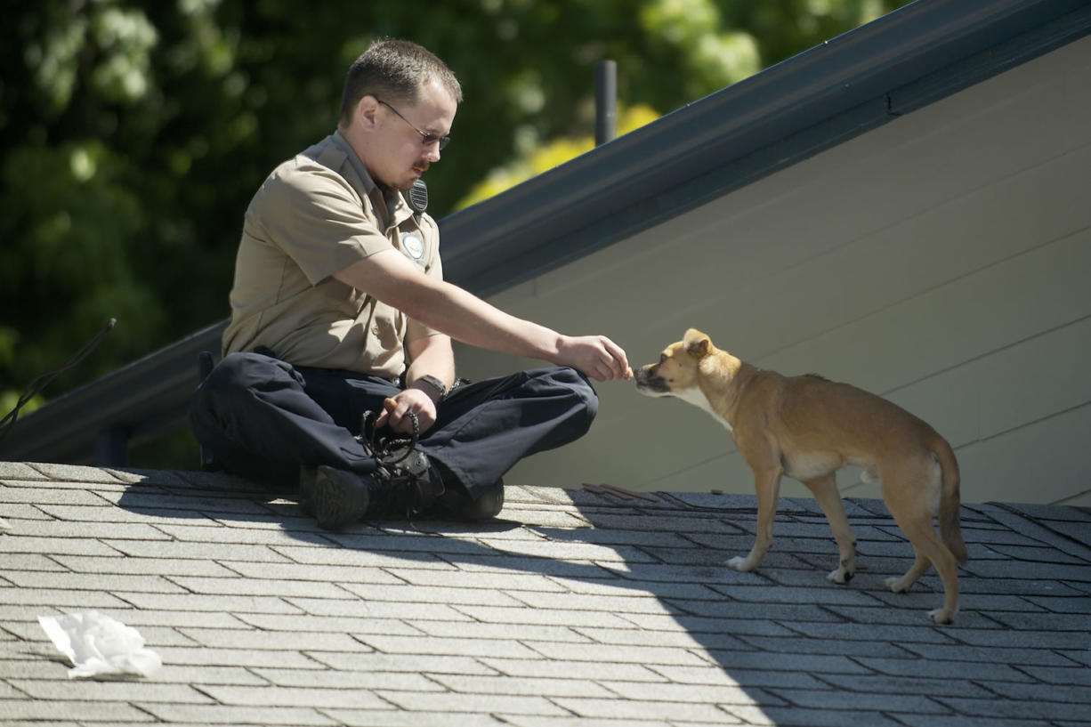 A Chihuahua mix was stranded on the roof of an Orchards area house Monday morning.