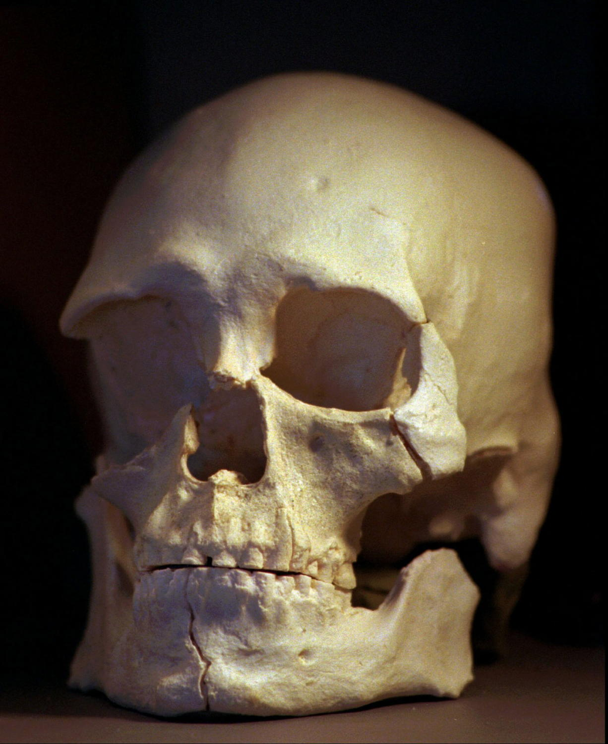 Files/Associated Press These 1997 photos show a plastic casting of the skull from the bones known as Kennewick Man. A scientist who studies the ancient skeleton says Kennewick Man wasn't from the Columbia River Valley where his bones were buried. Smithsonian anthropologist Doug Owsley told tribal representatives that isotopes in the bones indicate he was a hunter of marine mammals such as seals, and that he lived most of his life on the coast.