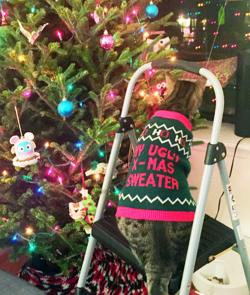 Cats Dogs Party Like Animals In Ugly Sweaters The Columbian