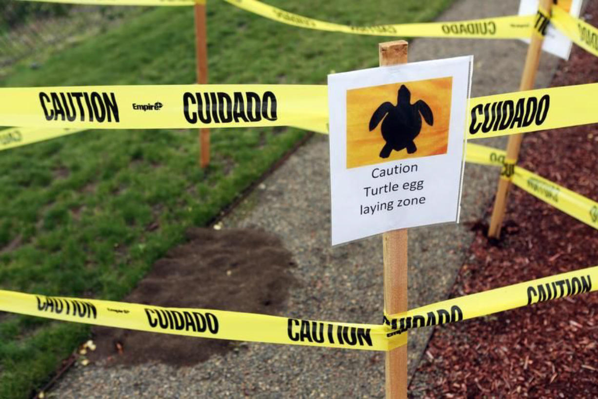 Capitol Subaru Salem Oregon >> Turtle Lays Eggs At Salem Ore Subaru Dealership