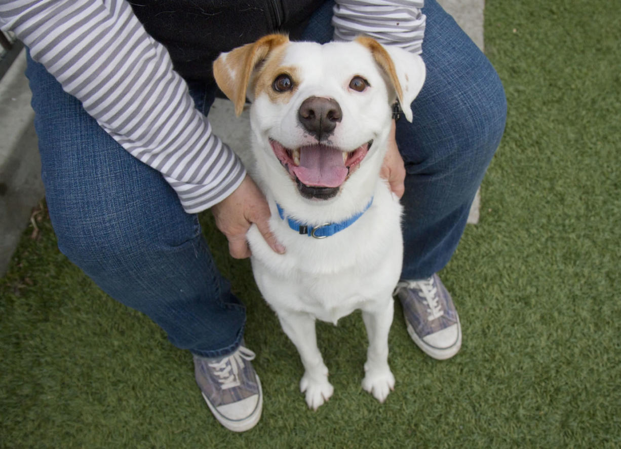 Former rescue dog Buddy smiles at his adoptive home in Los Angeles. Animal shelters and rescues become temporary homes to millions of dogs and cats every year, but no one has known exactly how many or how they got there.