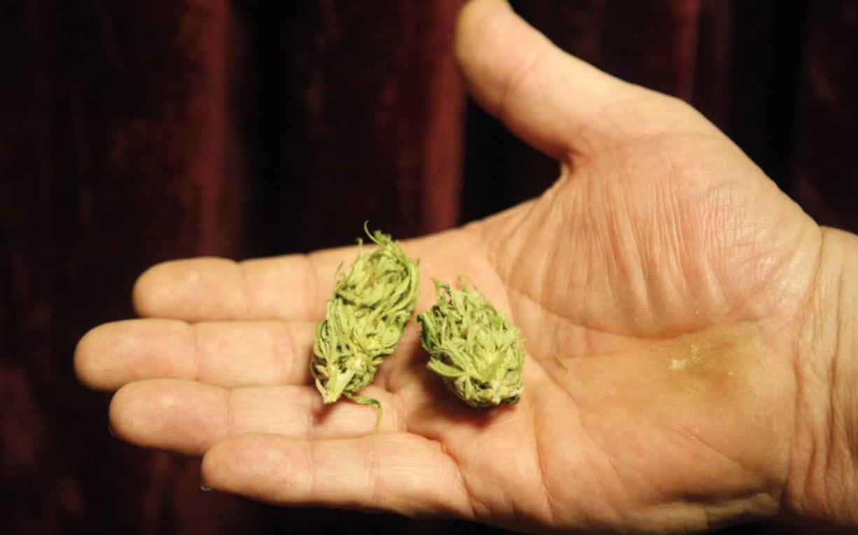 A Portland medical marijuana patient shows buds of cannabis in this 2009 photo.