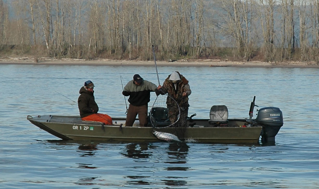 There were slightly more than 151,000 angling trips for spring chinook in the lower Columbia River in 2015.