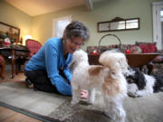 Sue Bohlmann plays with her dogs Gretel, a female Maltese papillon, and Mateo, a Havanese, at her home in Minnetonka, Minn.