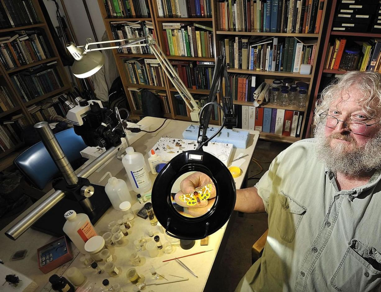Craig Sondergaard holds a tiger moth at his home in Washougal. Sondergaard has collected thousands of insects over the years.