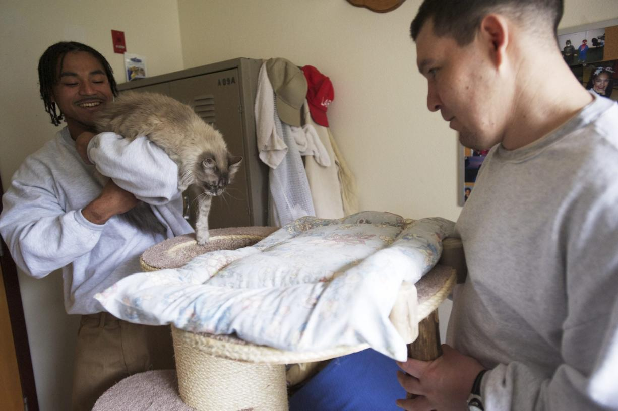 """Foster cat Clementine, whois part of Larch Corrections Center's Cuddly Catz program, has brought out the """"softer side"""" of inmates William Lozano, left, and Richard Amaro, Amaro said."""