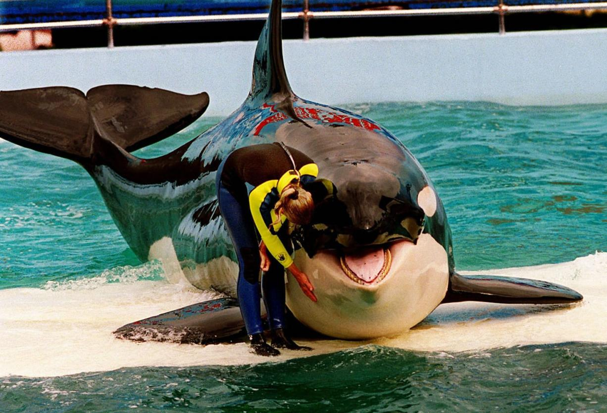 Files/The Miami Herald Trainer Marcia Hinton performs with Lolita in 1995 at the Miami Seaquarium in Miami.