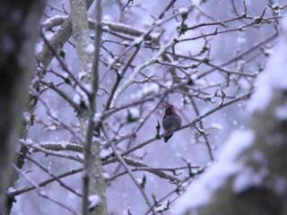 January reader photos: Winter weather