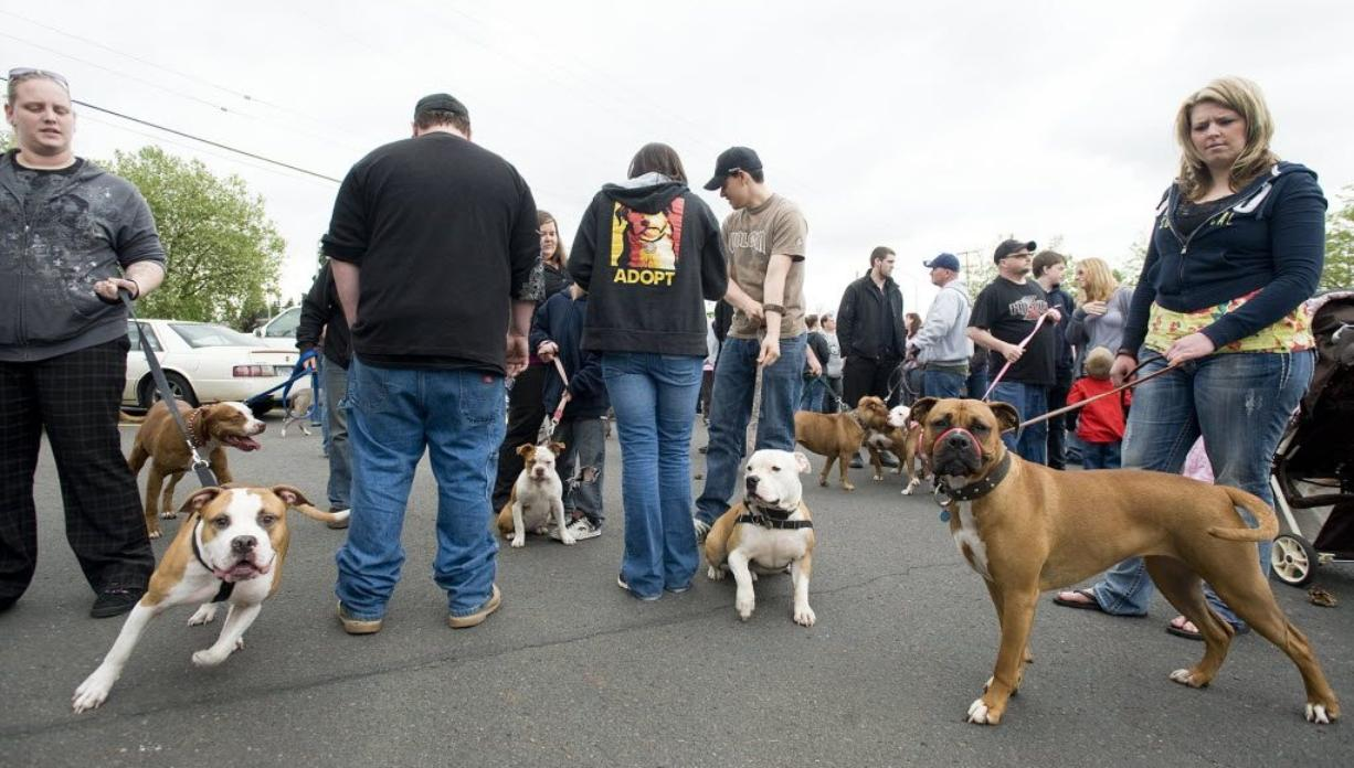 After nixing a proposed ban on pit bulls earlier this year, the Vancouver City Council on Monday seemed to favor adopting Clark County's dog control ordinance. Vancouver's Chief Assistant City Attorney, Judy Zeider, now must write an ordinance that could have its first reading as soon as Nov. 14.