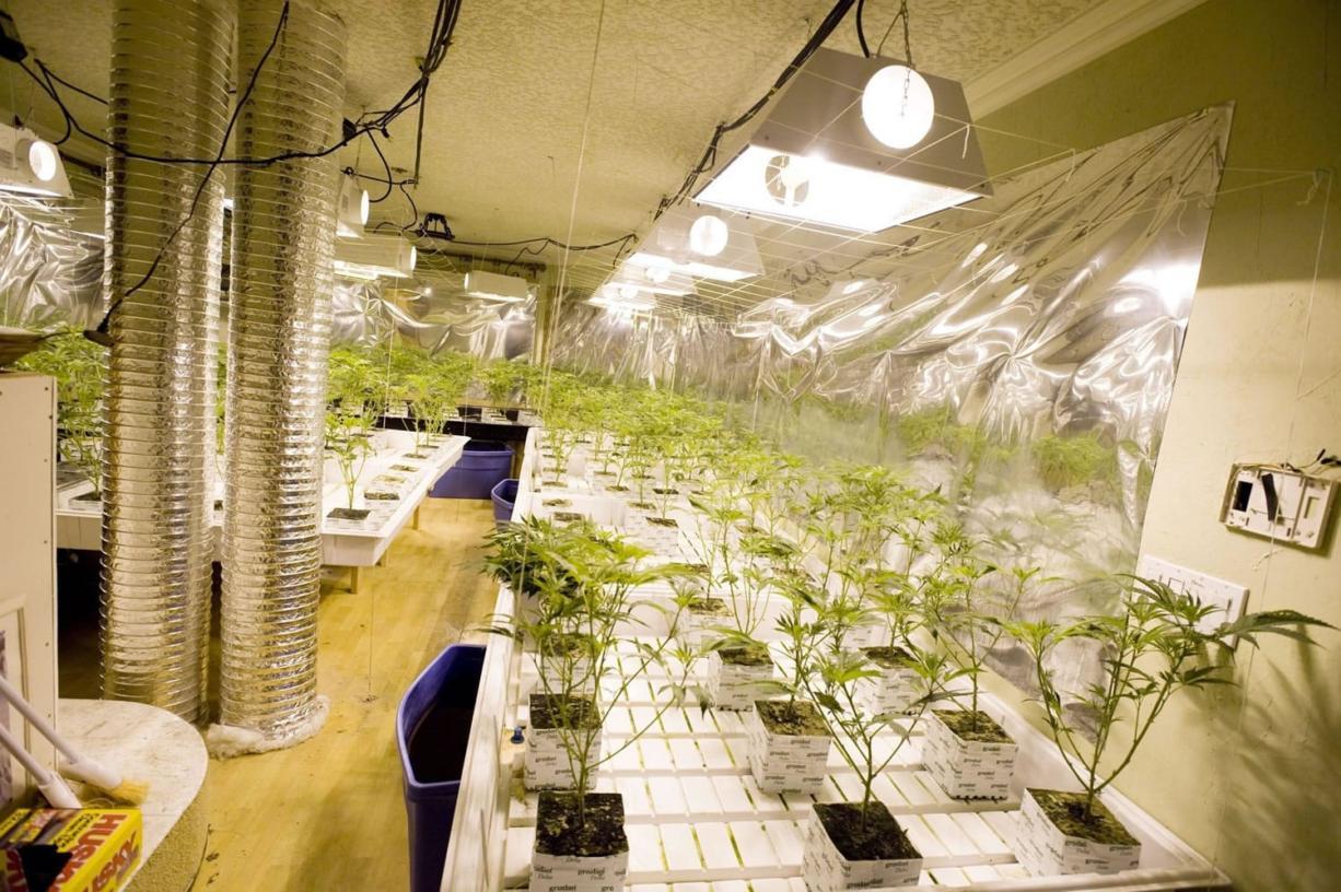 Police find 1,600 marijuana plants growing in Vancouver home