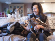 """At home in Camas, animal lover Caroline Reiswig gathers together her rescue dogs, the smallest of which is a 4.5-pound Chihuahua named """"Tiny."""" (Photos by Natalie Behring/ The Columbian)"""