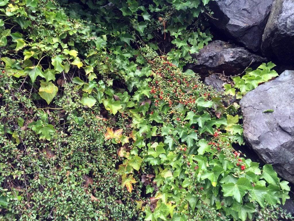edible landscape better than turf the columbian