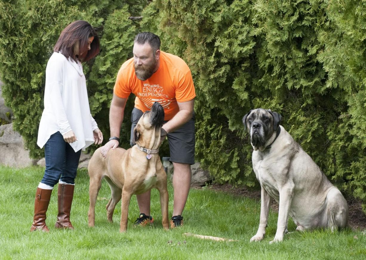 Julia Tickerhoof and Jason Fish pat their dog, Kazi, who was saved from a Korean meat farm, on Wednesday in their Vancouver backyard as their English mastiff J.T. looks on.