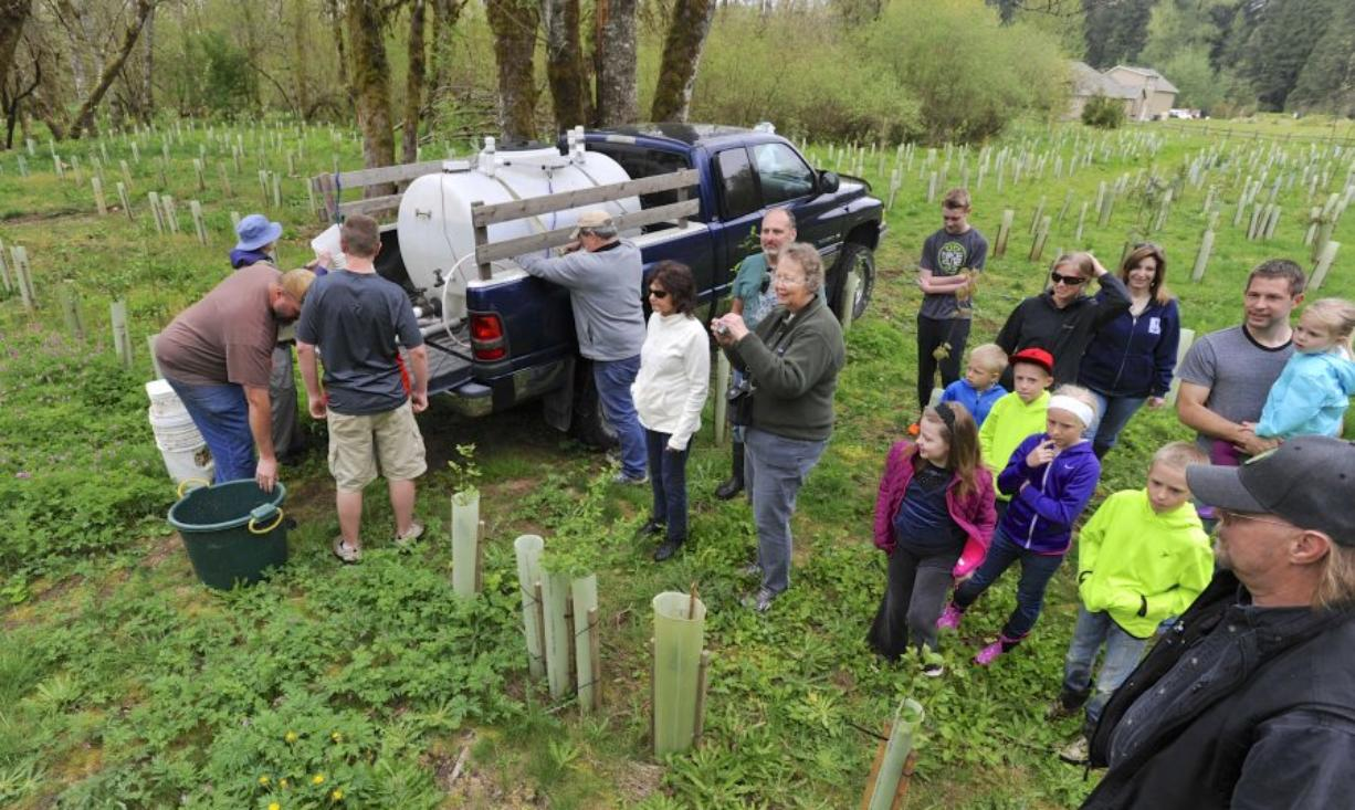 Volunteers and members of Northwest Wild Fish Rescue prepare Saturday to release young coho salmon into Salmon Creek near Battle Ground.