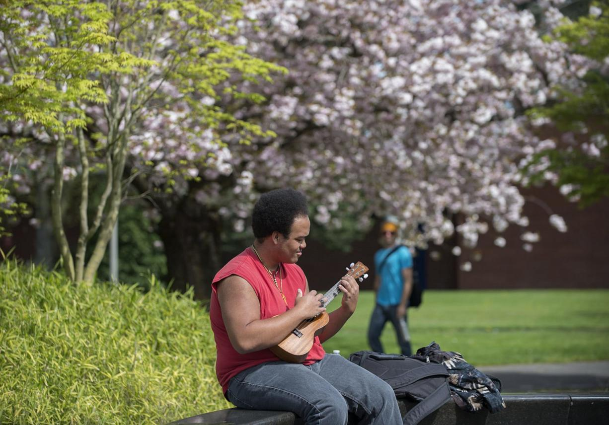 Cherry blossoms create a pink backdrop as biology major George Holloway plays his ukulele in between classes Wednesday at Clark College. The 100 shirofugen cherry trees in the southwest portion of the campus at Fort Vancouver Way and McLoughlin Boulevard were planted to commemorate Washington's centennial and to celebrate the friendship between Vancouver and its sister city, Joyo, Japan. (Amanda Cowan/The Columbian)