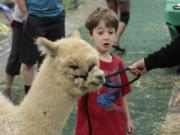 Waylon Doucet, 6, of Washougal pets an alpaca for the first time Saturday at Alpacapalooza, an annual showcase of the furry creatures. It continues today from 8:30 a.m. to 2 p.m. at the Clark County Event Center at the Fairgrounds.