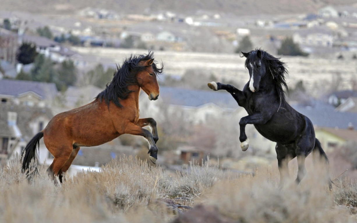 BLM boss: Wild horse program facing future $1B budget crisis