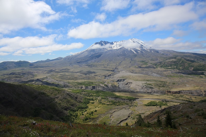 Vacation photo #2 from Mt. St. Helens in June 2016.  The wildflowers were in full bloom and the mountain cleared just as we reached the Visitor Center at Johnson Ridge where we were fortunate enough to enjoy the talk by the Ranger.
